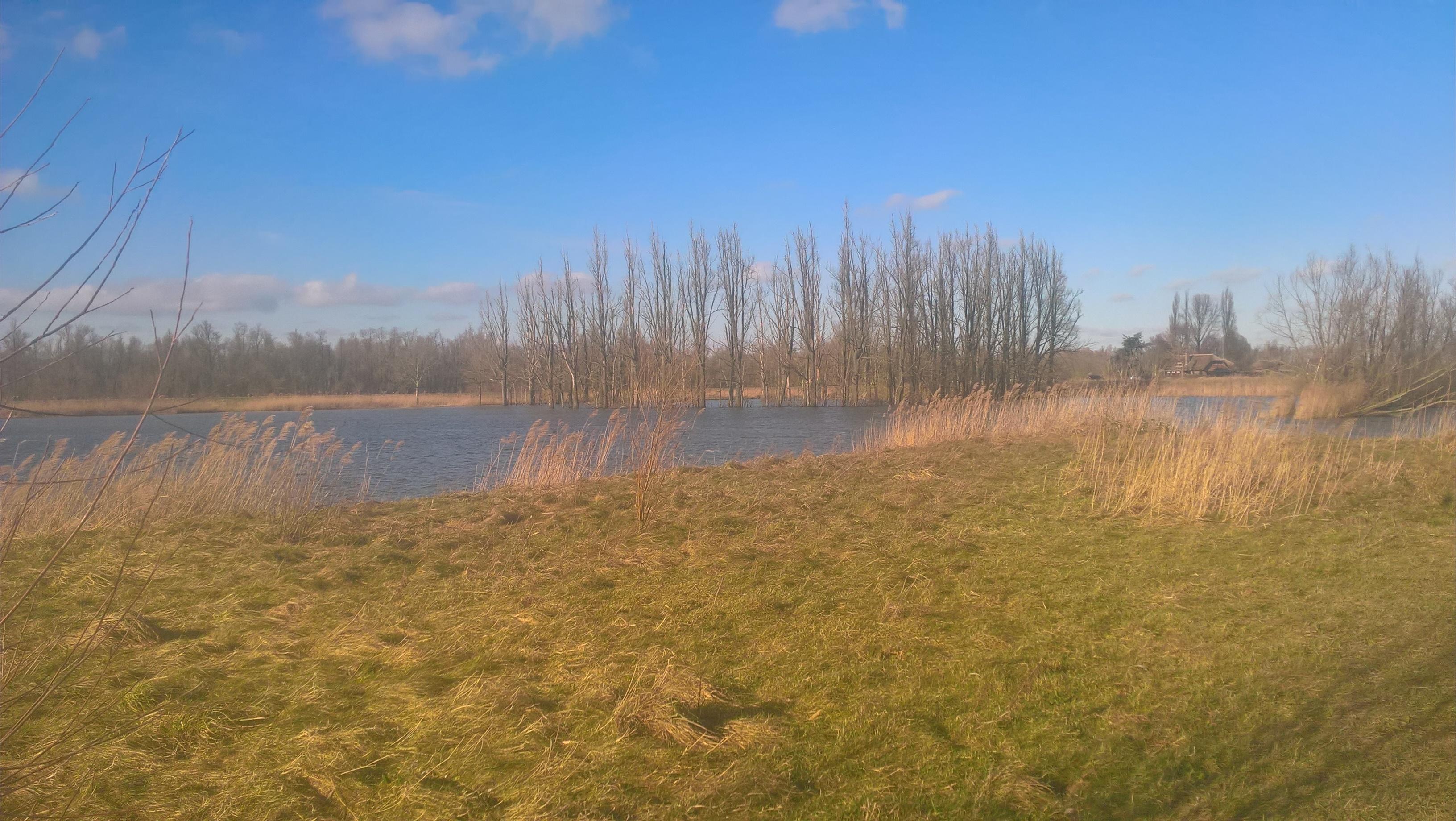 Biesbosch3
