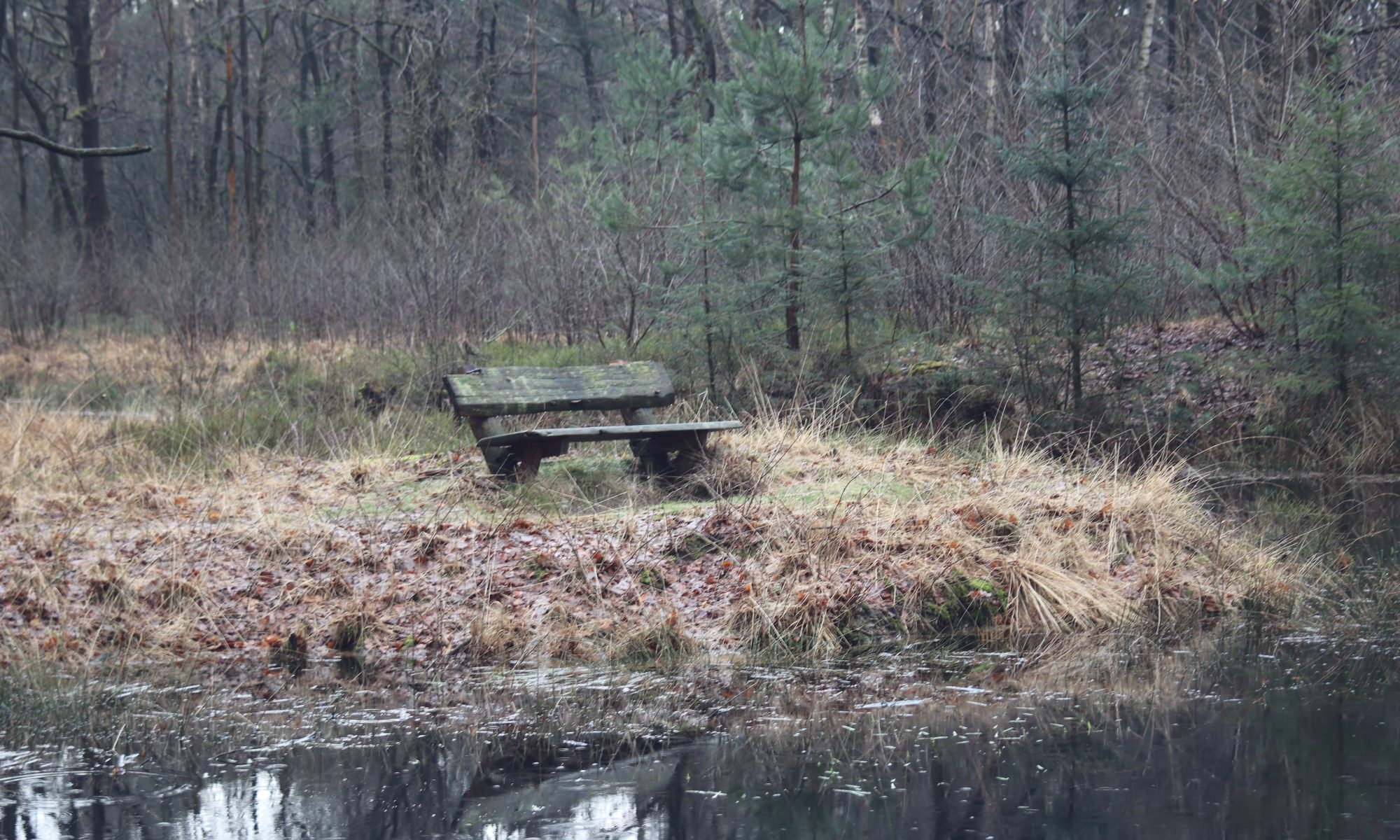 Dartheide - Bench